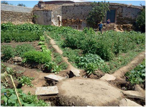 agricultura arroyana