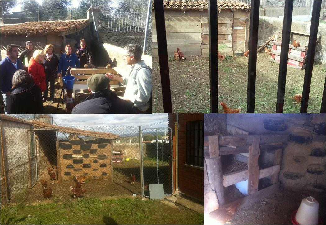 gallinero comunitario Campillo