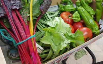 La apuesta agroecológica local como respuesta al cambio climático