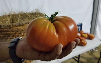 La alternativa de la microfinanciación para iniciativas agroecológicas
